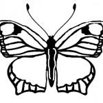 Schmetterling-4