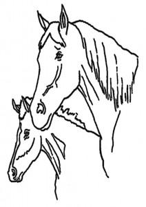 ausmalbilder beste pferde -2