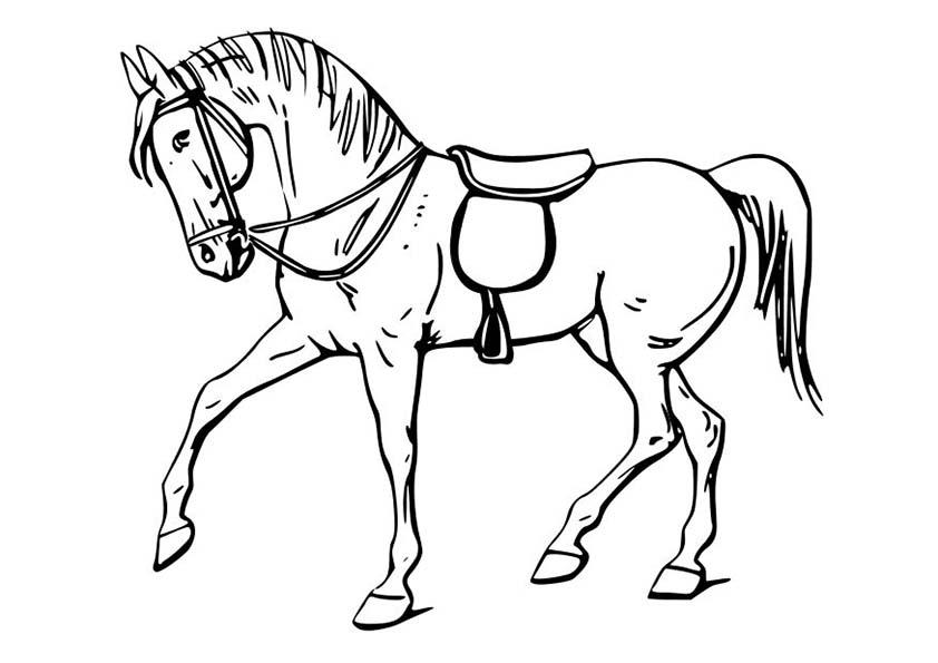 ausmalbilder beste  pferde -3