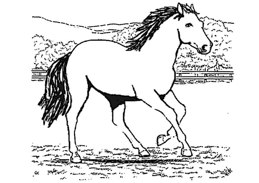 ausmalbilder beste pferde -4