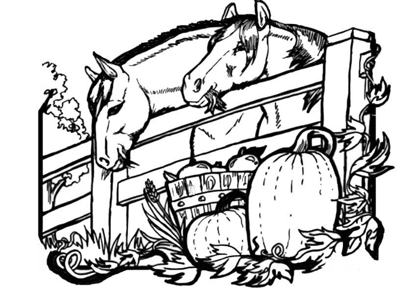 ausmalbilder beste pferde -5