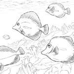 Fische-6