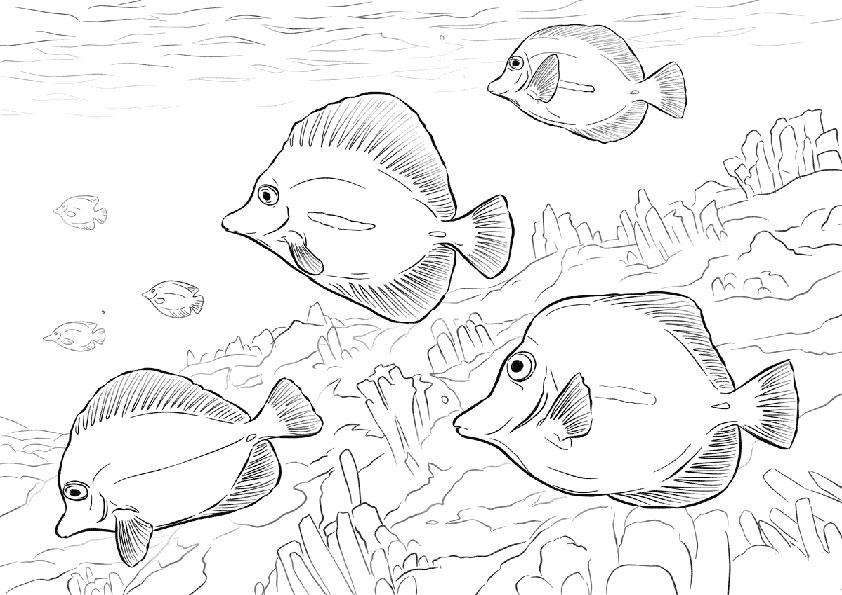 ausmalbilder beste fische-6