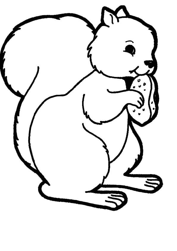 Eichhörnchen-6