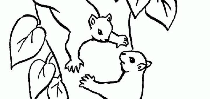 ausmalbilder beste eichhörnchen-5
