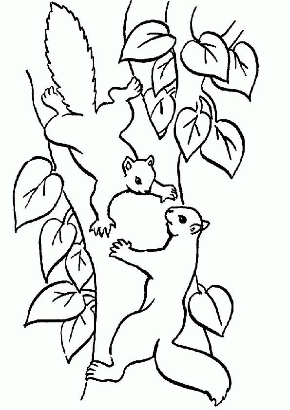 Eichhörnchen-5