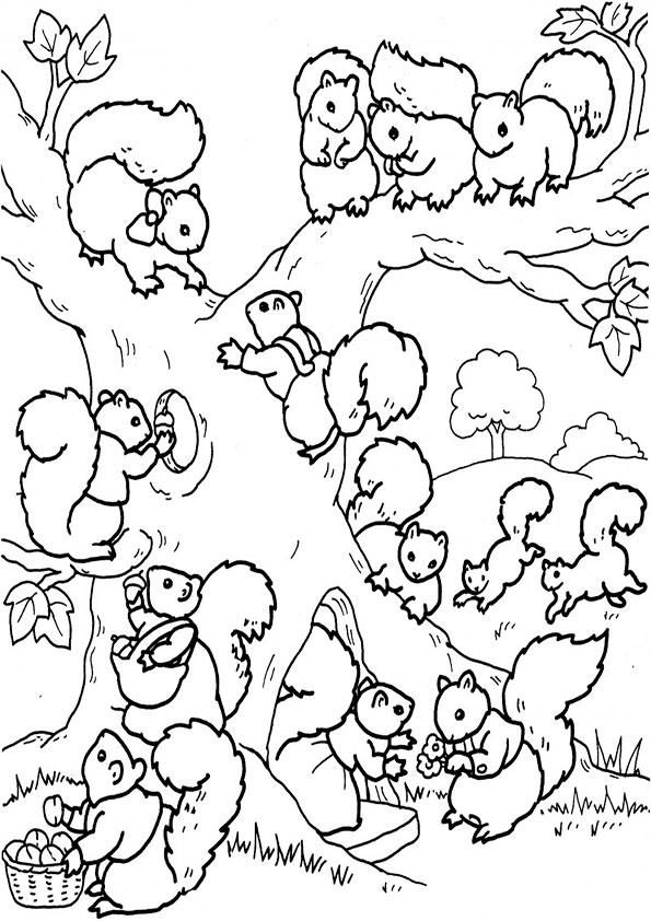 ausmalbilder beste eichhörnchen-7
