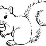 Eichhörnchen-9