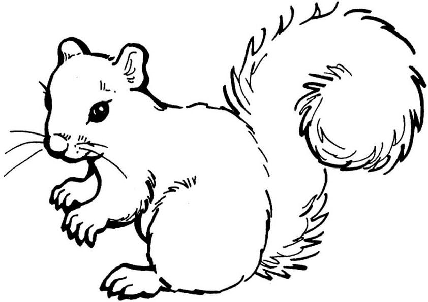 ausmalbilder beste eichhörnchen-9