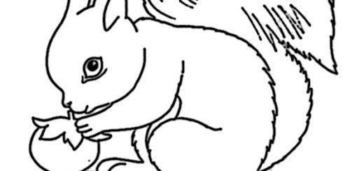 ausmalbilder beste eichhörnchen-11