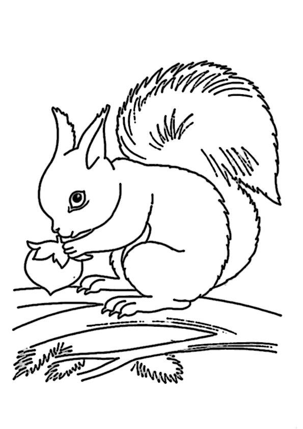 Eichhörnchen-11