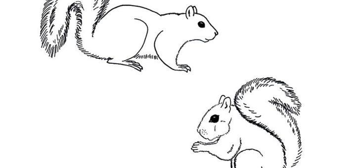 ausmalbilder beste eichhörnchen-12