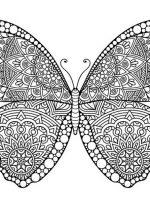 Schmetterling-9